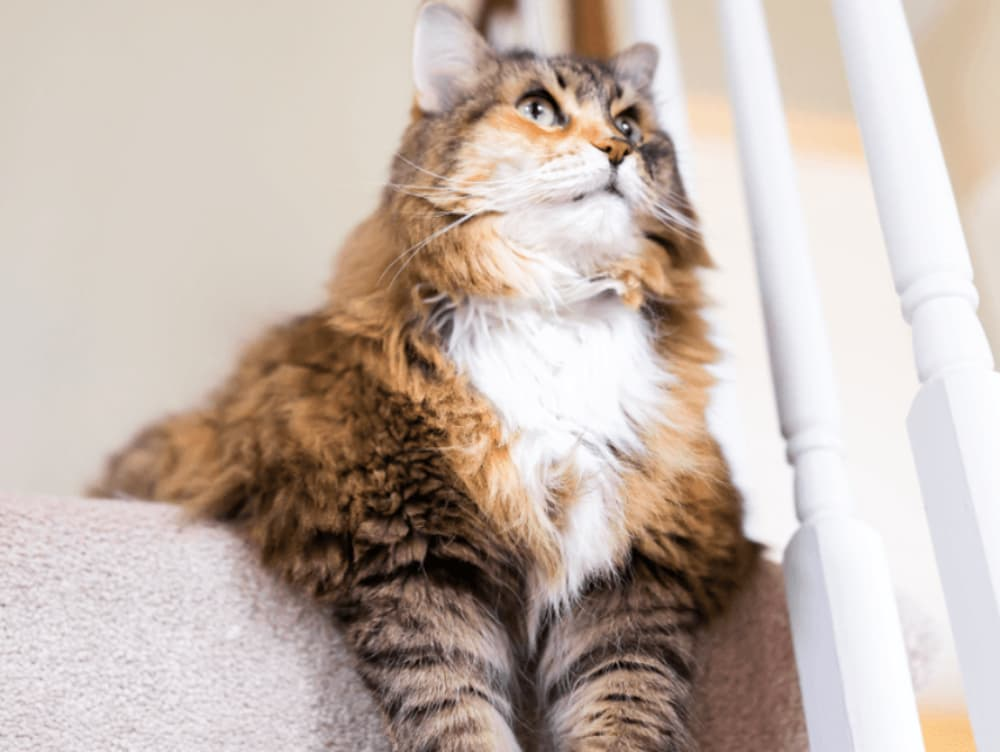 Why Is My Cat Avoiding the Stairs?