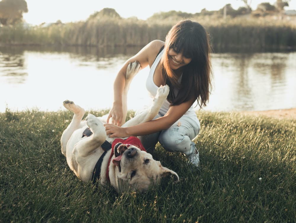 CBD Research and Pets: Benefits, Potential Side Effects and What You Should Know