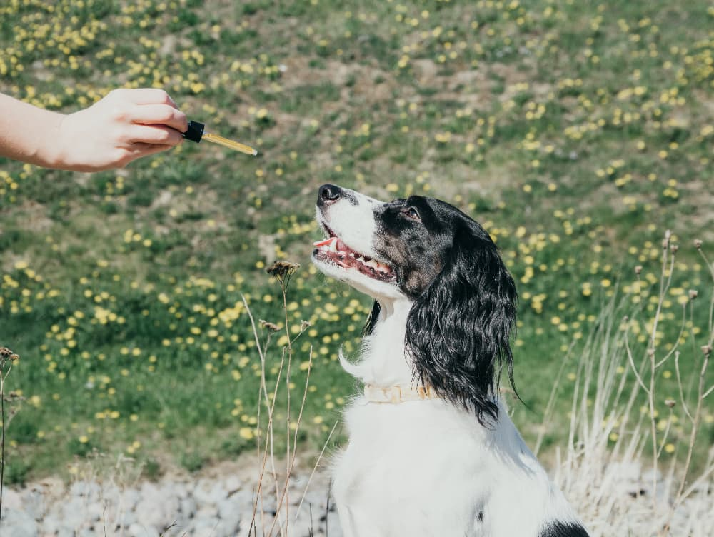 CBD Pet Products: Determining Safety and Quality