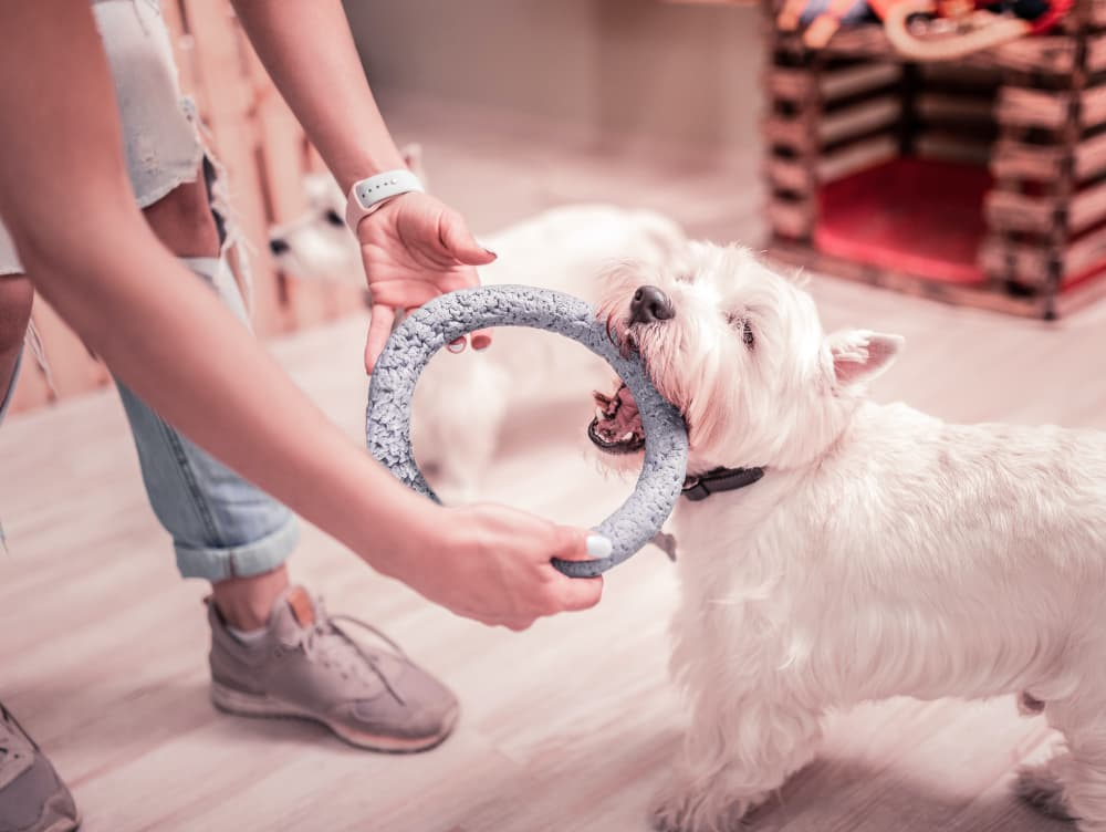 Dog Separation Anxiety Training: Techniques and Tips to Try
