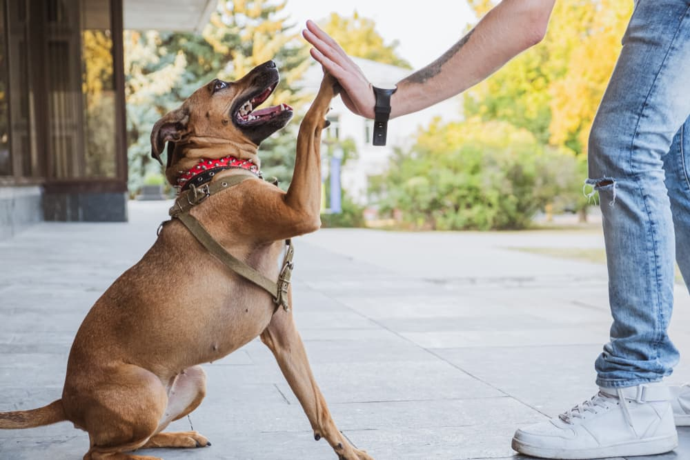 Dog giving a person a high five