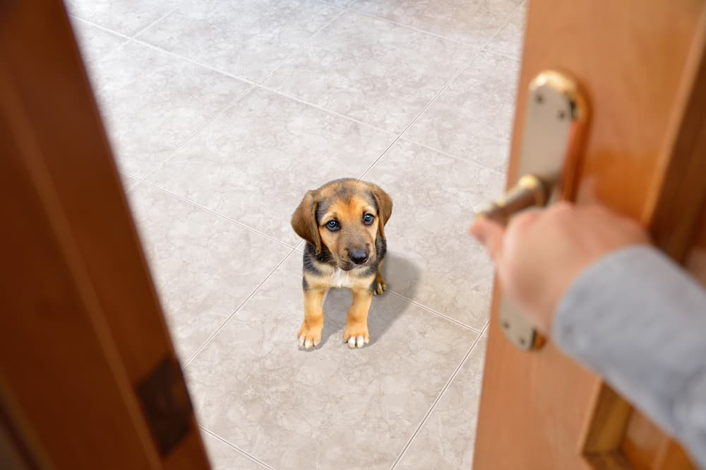 woman coming home to dog