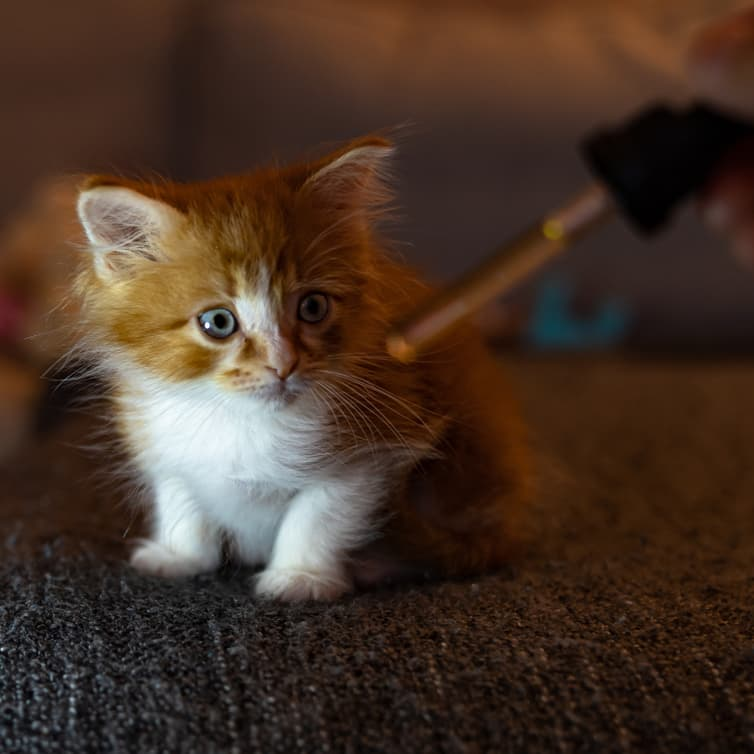 Cat receiving dose of hemp oil