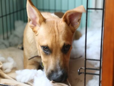 Dog Crates for Separation Anxiety: What to Look For