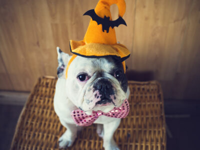 Avoiding the Halloween Scaries: 6 Tips to Prevent Pet Stress
