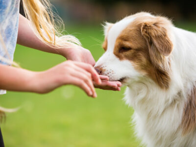 Vegan Dog Chews: What to Look For On the Label