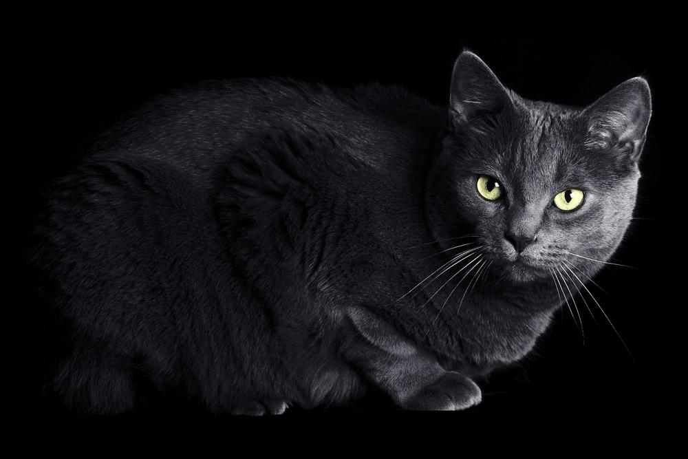 Black cat stressed on Halloween