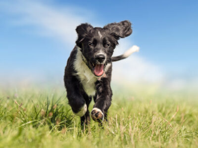 MSM for Dogs: What Exactly Is It?
