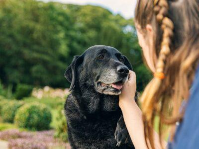 Senior Dog Adoption Checklist