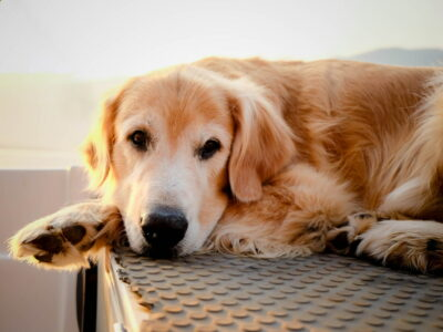 5 Common Hip Problems in Dogs