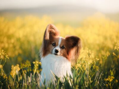 Brewer's Yeast for Dogs: Benefits and Uses