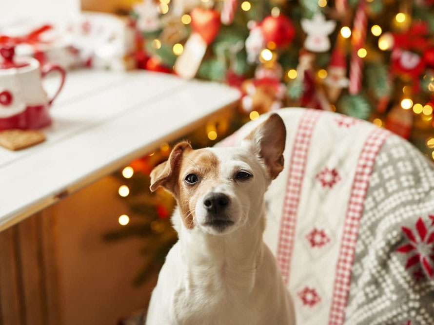 Holiday Tips: Handling Holiday Guests When Your Dog Dislikes Strangers