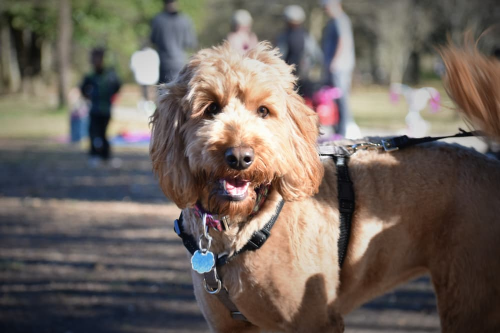 Dog Parks in Atlanta: 5 of the Most Popular