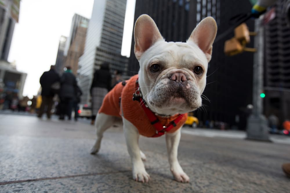 The Top 8 Dog Parks NYC Has to Offer