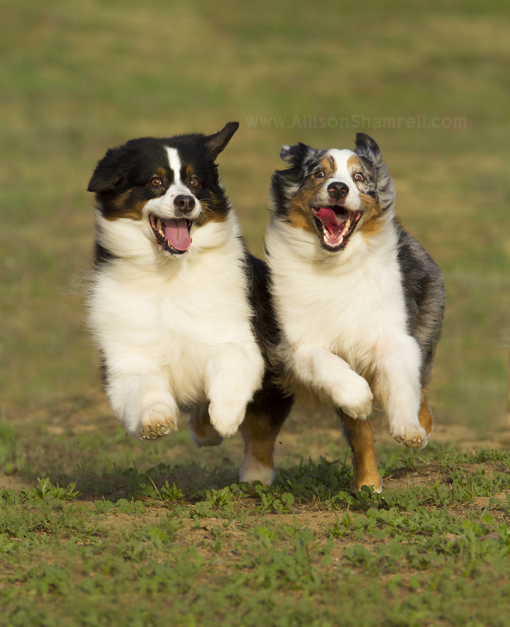 How to Take Photos of Dogs Who Won't Sit Still