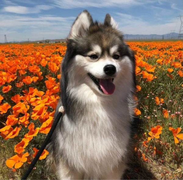 Dog Modeling: Does Your Pup Have What It Takes?
