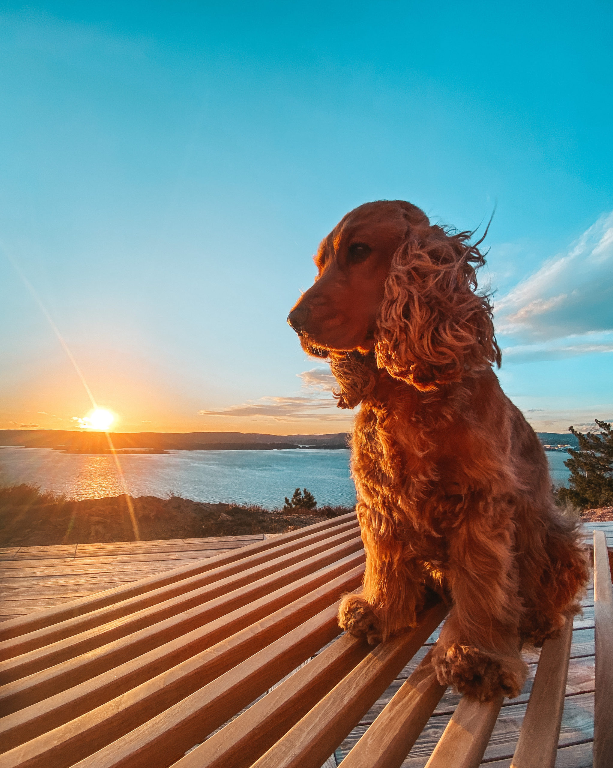 Take Better Photos of Your Dog with Your Cell Phone