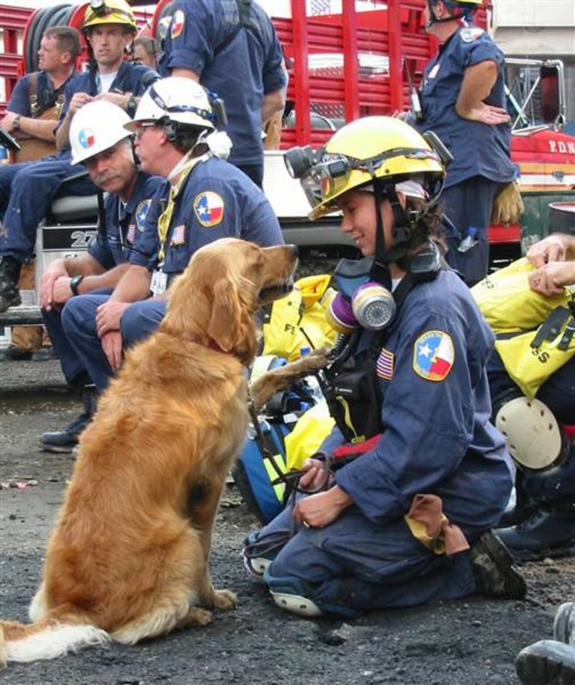 Honoring the Hero Guide Dogs of September 11th